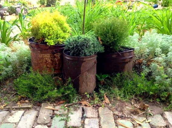 Theresa Jones‎'s three colors of evergreens set off by rusty buckets
