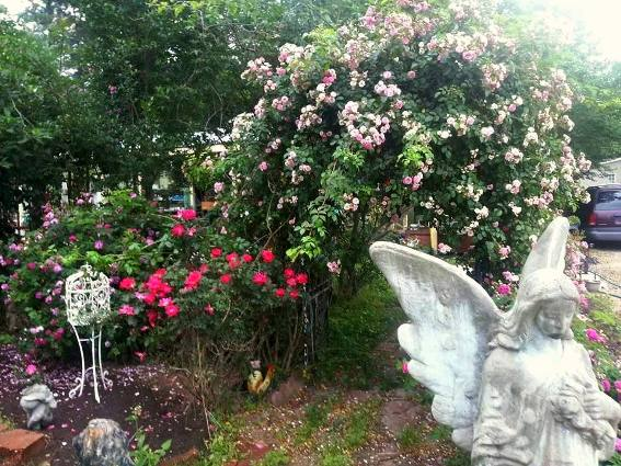 A sizable garden angel contrasts with airy roses