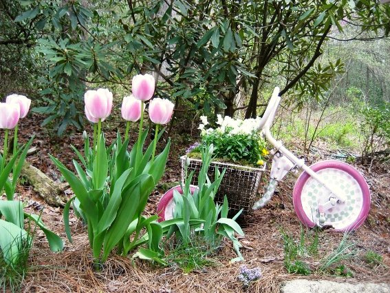 Barbara Stanley's pink tricycle with tulips
