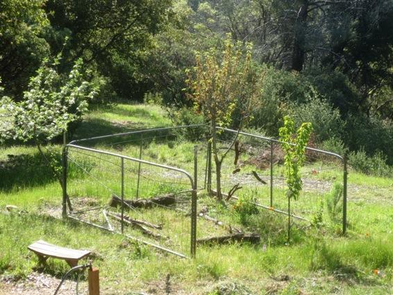 Sue Langley's garden using three ranch gates