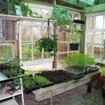 Inside Valerie Haws's potting shed