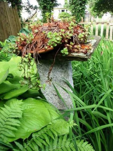 Cherrie Carine raises her succulents high,...on a stump