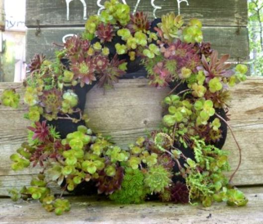 Jackie Cammidge's succulent wreath