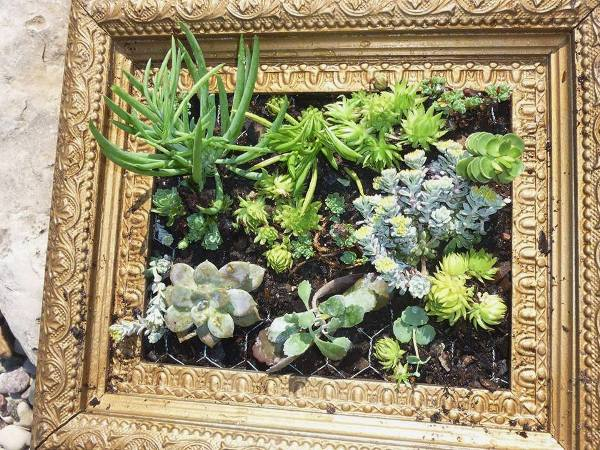 Kathy Schumacher's framed suculent garden
