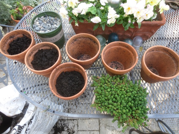 Take one 6 pak of succulents and six medium sized clay pots