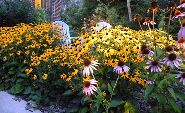 Teresa's summer garden (17)