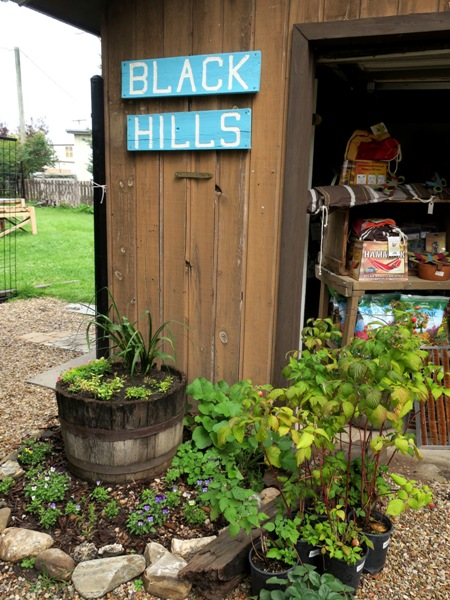 This clever 'pocket garden' starts with a half barrel.