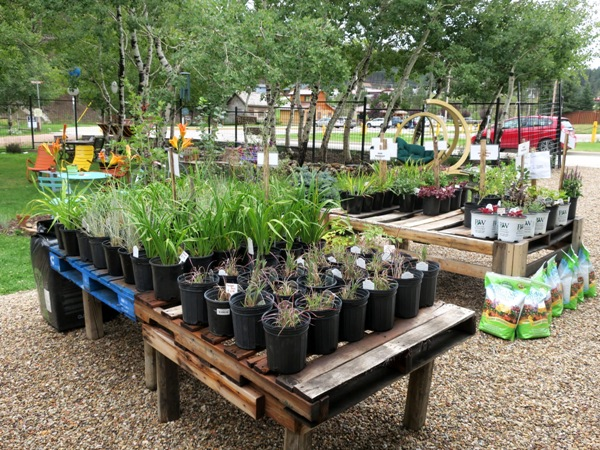 Though all of us FMG girls were travelling with not much room to pack plants, we enjoyed browsing...