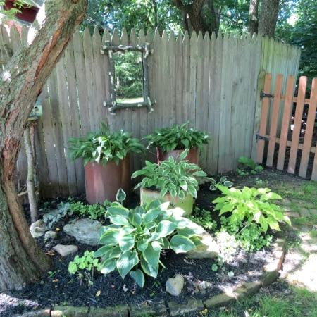 One of my favorite spots in the Wickline's garden is one of the many hosta beds.. instead of planting all in at ground level, Dick has added height by using chimney tiles..